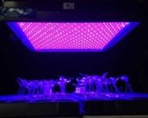 LED pic