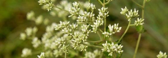 Online Plant Identification Courses