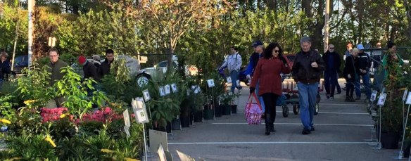 Pi Alpha Xi - Fall Plant Sale