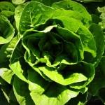 HorticultureNS-Gallery11