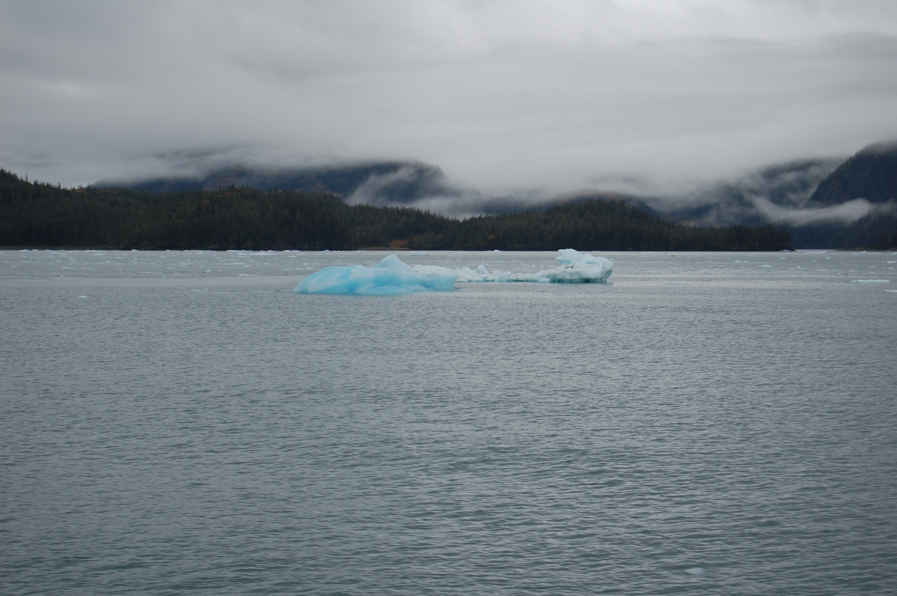 Icebergs calved by the Columbia Glacier