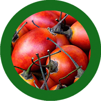 tomatearbol_web