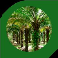 palma_web