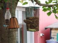 5-ocells