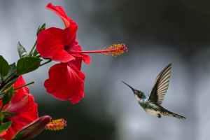 brown hummingbird selective focus photography