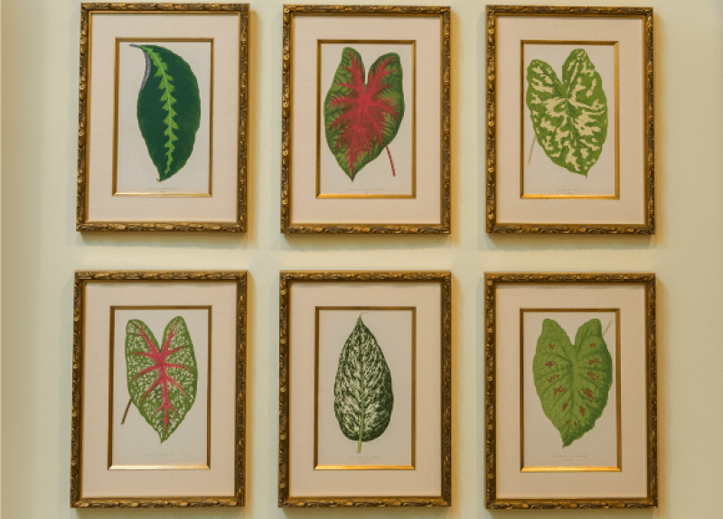 Pictures of leaves
