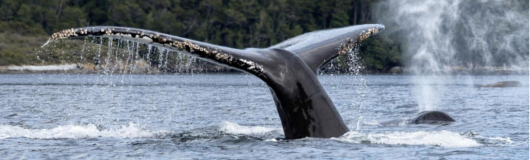 Whale Watching – 2 nights / 1 day