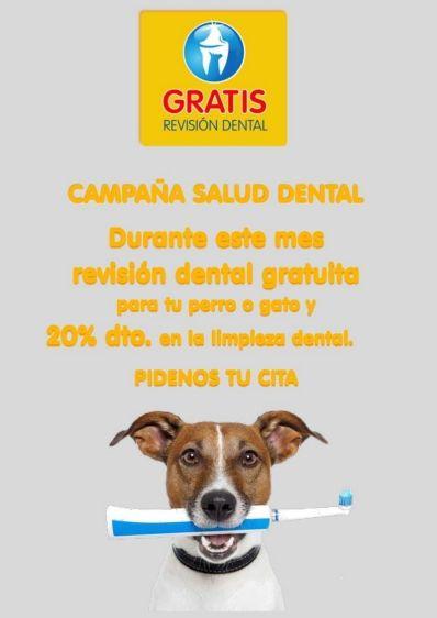 Campaña salud dental 2018