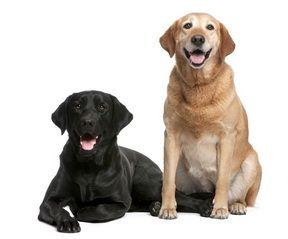 Perros mayores con artrosis