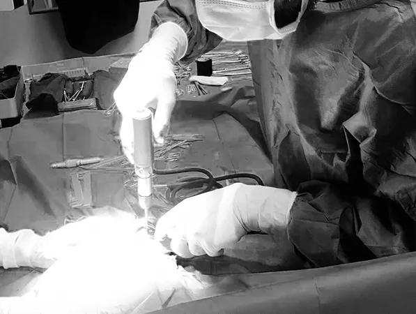 especialidades veterinarias traumatología y ortopedia veterinaria hospital veterinario aitana 24 horas
