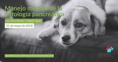 Jornada sobre el manejo médico de la patología pancreática en veterinaria