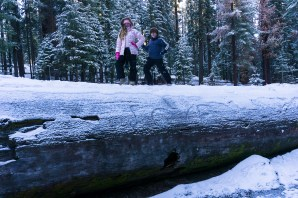 3-31-2016_The_Great_Spring_Break_Road_Trip_of_2016-Death_Valley-Sequoia-Yosemite__DSC2209