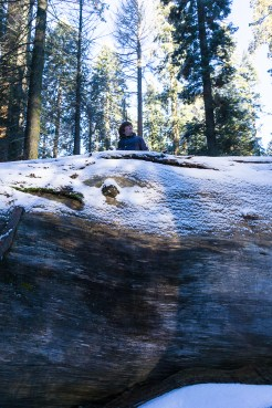3-31-2016_The_Great_Spring_Break_Road_Trip_of_2016-Death_Valley-Sequoia-Yosemite__DSC2288