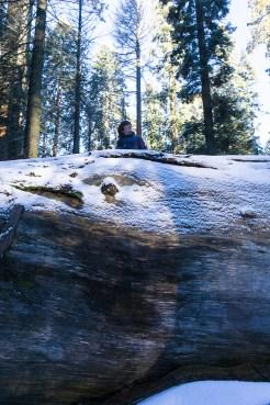 3-31-2016_The_Great_Spring_Break_Road_Trip_of_2016-Death_Valley-Sequoia-Yosemite__DSC2288
