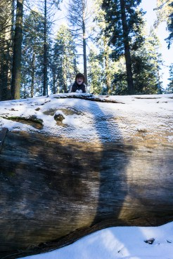 3-31-2016_The_Great_Spring_Break_Road_Trip_of_2016-Death_Valley-Sequoia-Yosemite__DSC2292