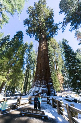 3-31-2016_The_Great_Spring_Break_Road_Trip_of_2016-Death_Valley-Sequoia-Yosemite__DSC2598