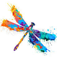 dragonfly logo 2020.png