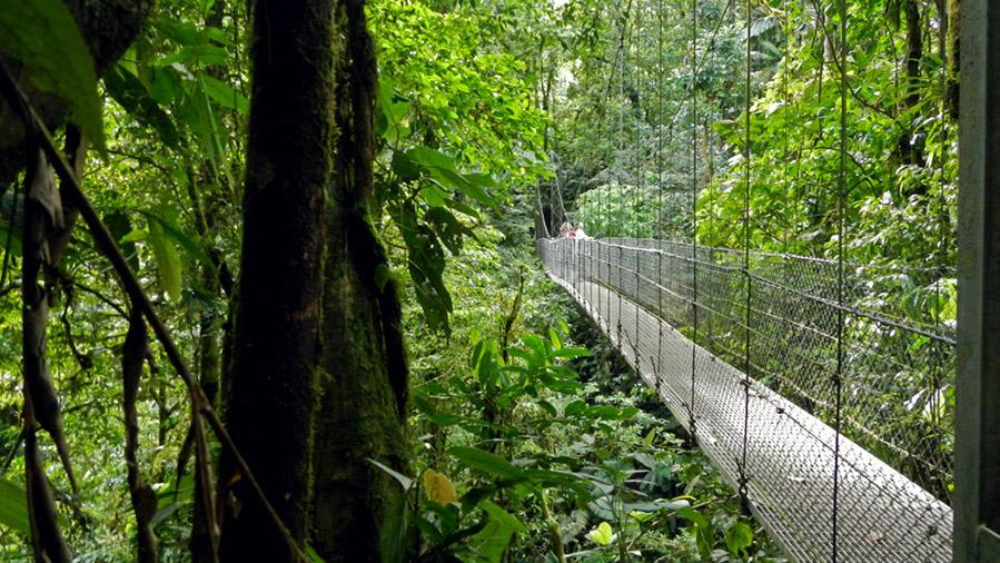 Hanging Bridges From: $65.00 p/p
