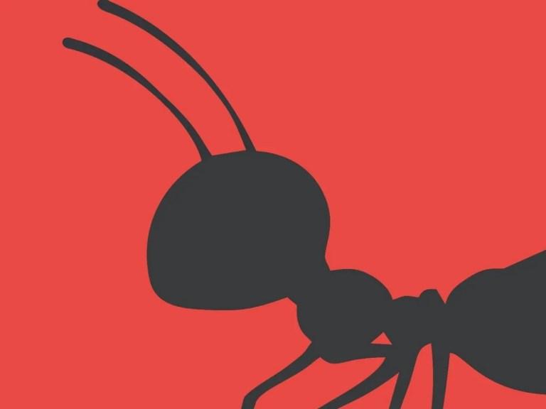 Hormigas del Hostel Hormiga Negra