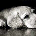 悪質!盲導犬 数箇所さされるも出血に耐えて任務遂行!