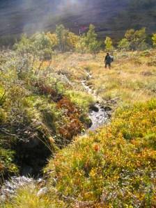 Vackra vyer i Hotagsbygden. Foto Hotagenkortet