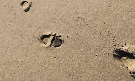 "Carbon ""Bootprints"""