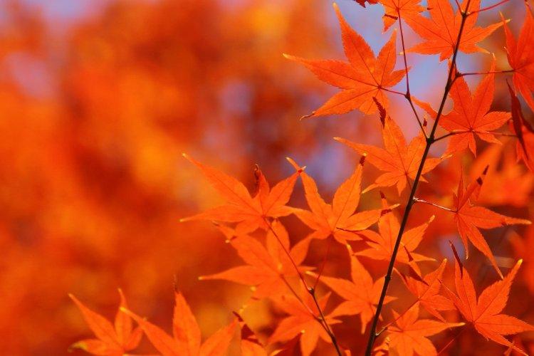 xautumn-leaves_00005-jpg-pagespeed-ic-pmyry_siuu