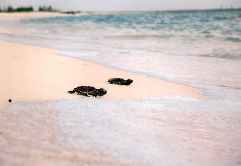 Isla de la pasión - isla4-1024x704