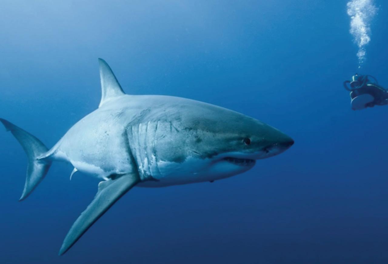 10 animales en peligro de extinción | Hotbook