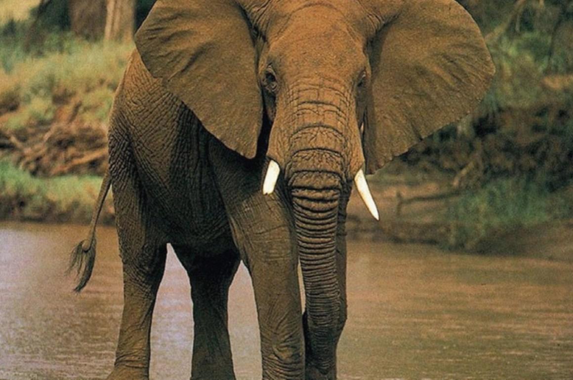 10 animales en peligro de extinción - animales_galeria05