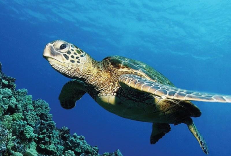 10 animales en peligro de extinción - animales_galeria06-1024x696