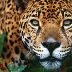 10 animales en peligro de extinción - animales_galeria08