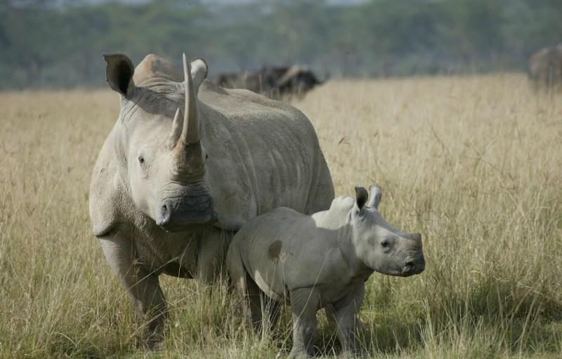 10 animales en peligro de extinción - extincion_01