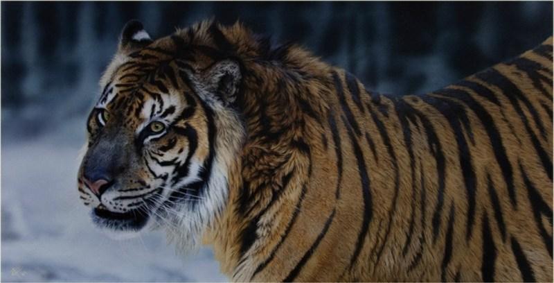 ANIMALES EN PELIGRO DE EXTINCIÓN - extincion_02-1024x523