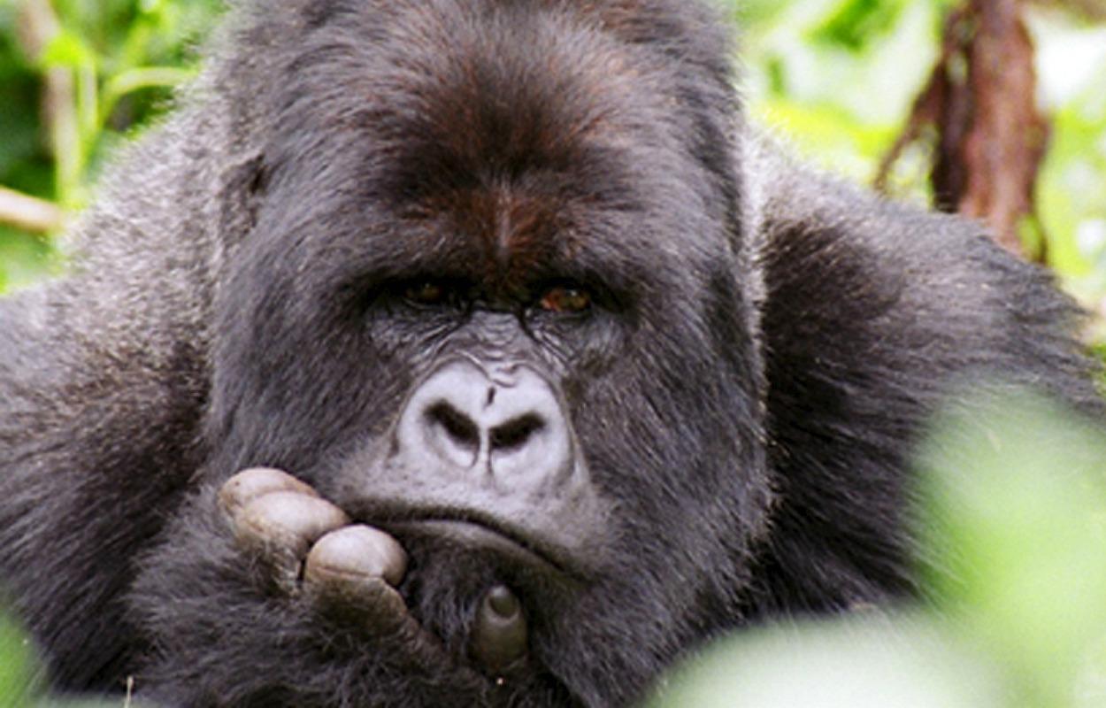 Animales: ANIMALES EN PELIGRO DE EXTINCIÓN