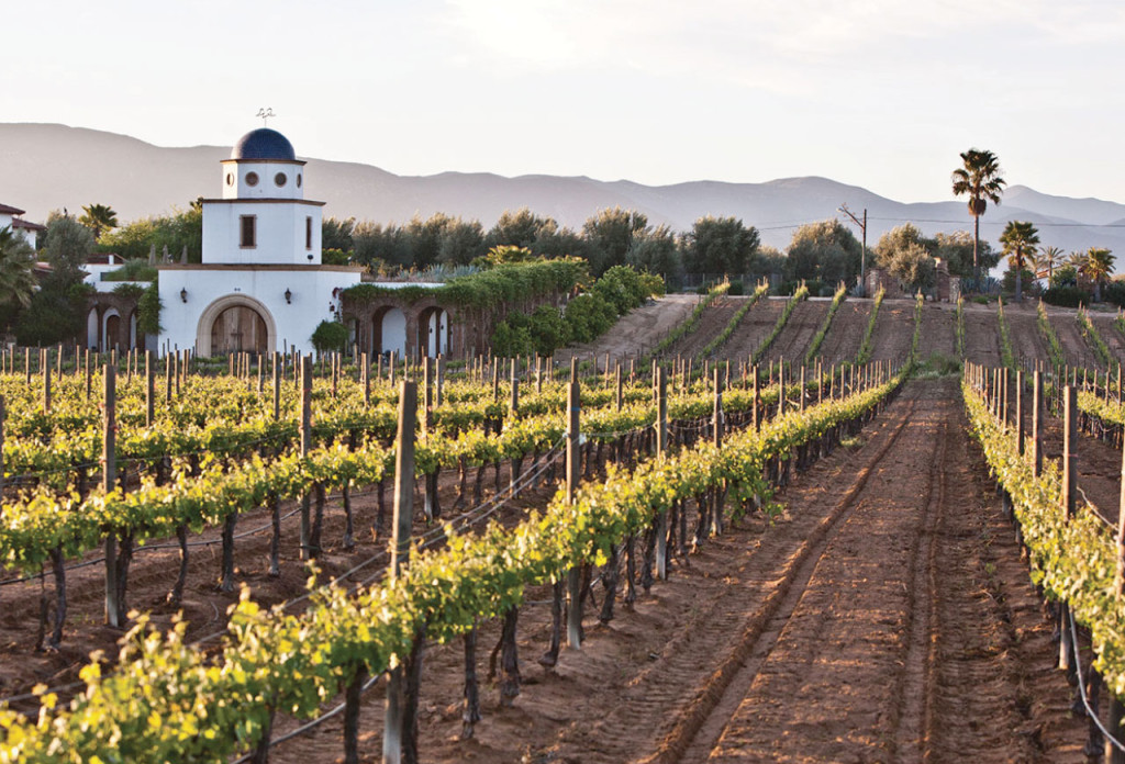 Hotbook | 5 WINERIES you can not miss in the Guadalupe Valley | hotsnack hotdrink