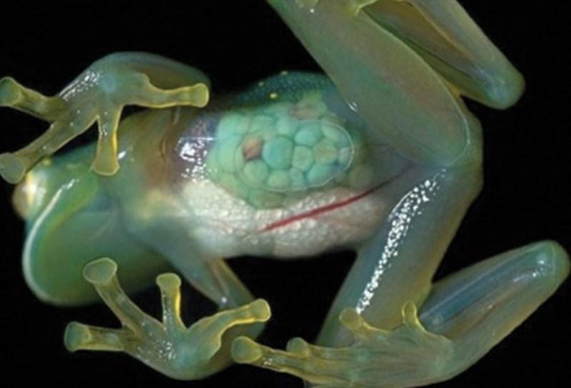 La especies más exóticas del mundo - ee1-1024x696