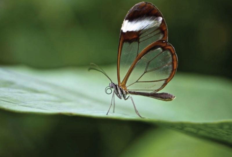 La especies más exóticas del mundo - ee9-1024x696