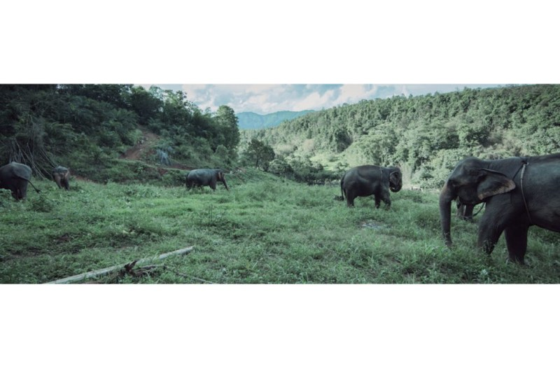 PATARA ELEPHANT FARM - patara-1024x696