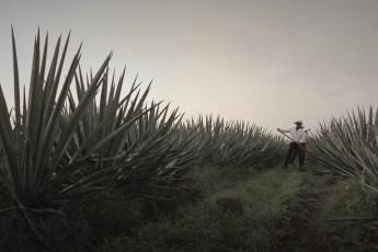 Tequila 1800 Milenio - 1800-3