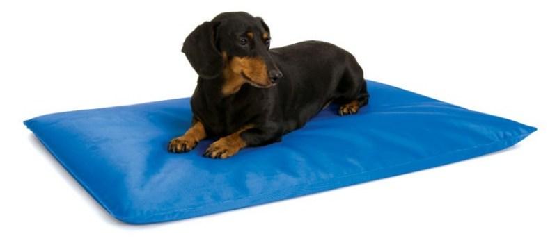 10 gadgets para disfrutar con tu perro  - 5866626_orig