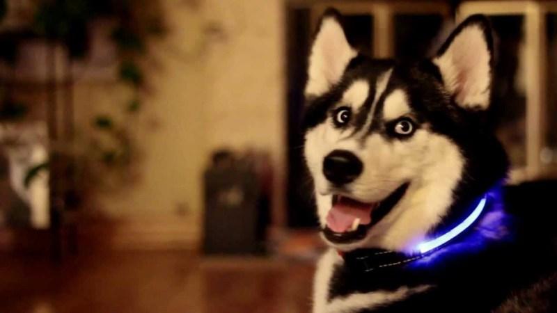 10 gadgets para disfrutar con tu perro  - maxresdefault1
