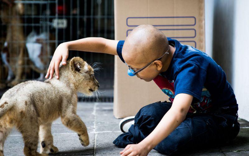 Dr. Sonrisas, la felicidad es la mejor medicina - Dr-Sonrisas-Niño-y-tigre-cachorro