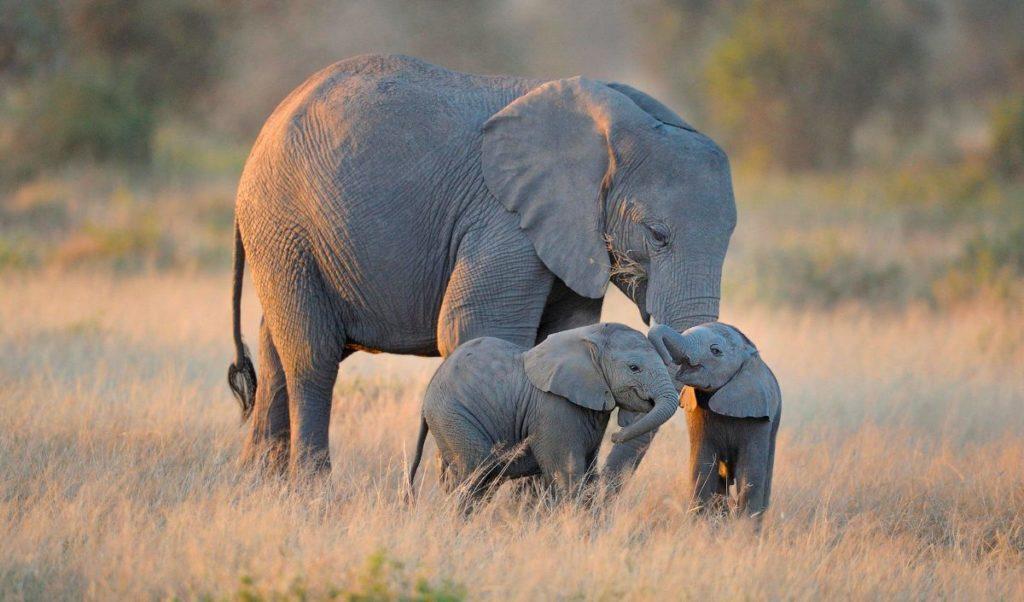 10 cosas que no sabías sobre los elefantes - 10 cosas que no sabias sobre los elefantes portada