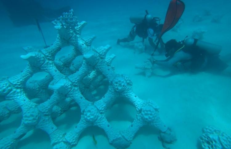La nueva propuesta en 3D para salvar los arrecifes de coral - 3dreef_buceo