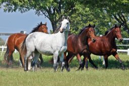 Rancho Hípico La Silla en Monterrey, el criadero más importante de caballos de salto en México.