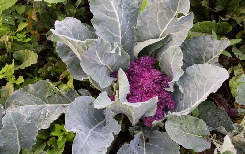 Una receta con ingredientes de Xochimilco - huerto-plantas-vida-xochimilco-cultivo