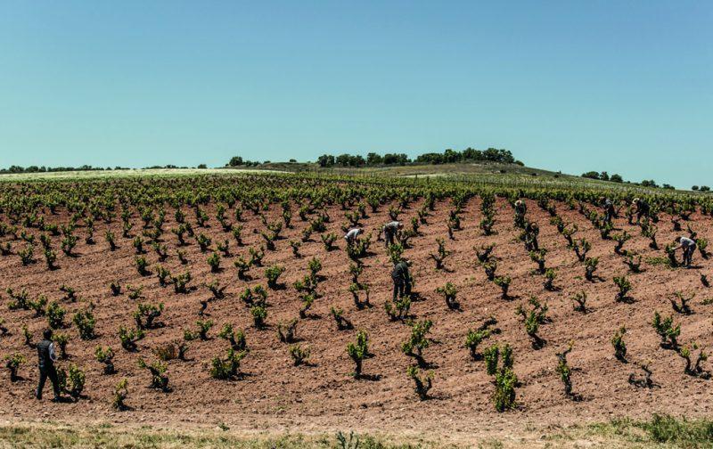 Bodegas Emilio Moro, tres generaciones de tradición vinícola - bodegas-emilio-moro-5