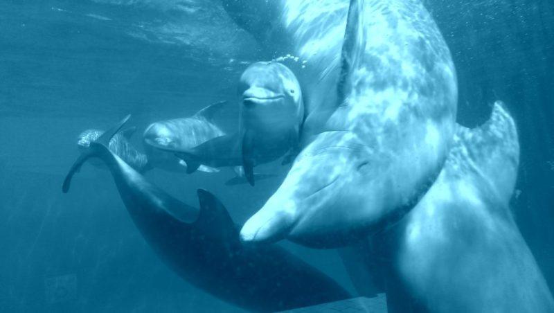Datos curiosos sobre los delfines - como-se-comunican-los-dfelfines