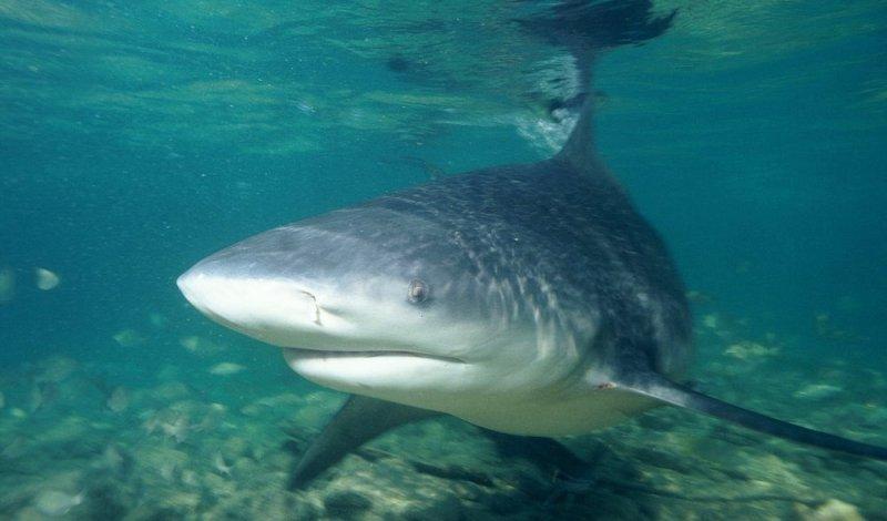 Datos que probablemente no sabías sobre los tiburones - datos-que-probablemente-no-sabias-sobre-los-tiburones-6